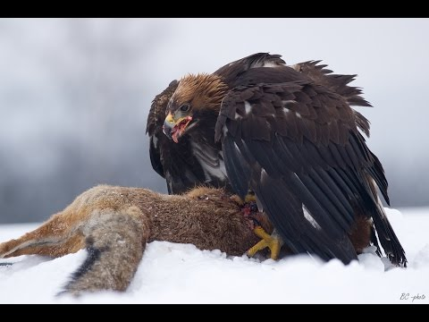 Top 10 Largest Birds Of Prey