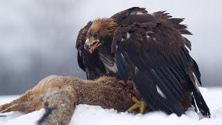 Top 10 Largest Birds of Prey