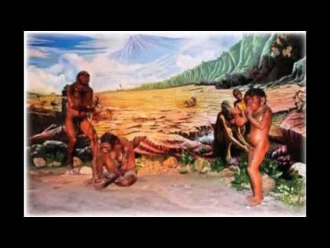 Homo Erectus And Homo Habilis Coomparison! (Facts INCLUDED!)