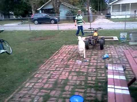 My Kids Playing With There Dog In The Bk Yard