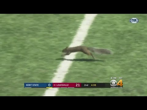 Squirrel Scores TD In College Football Game