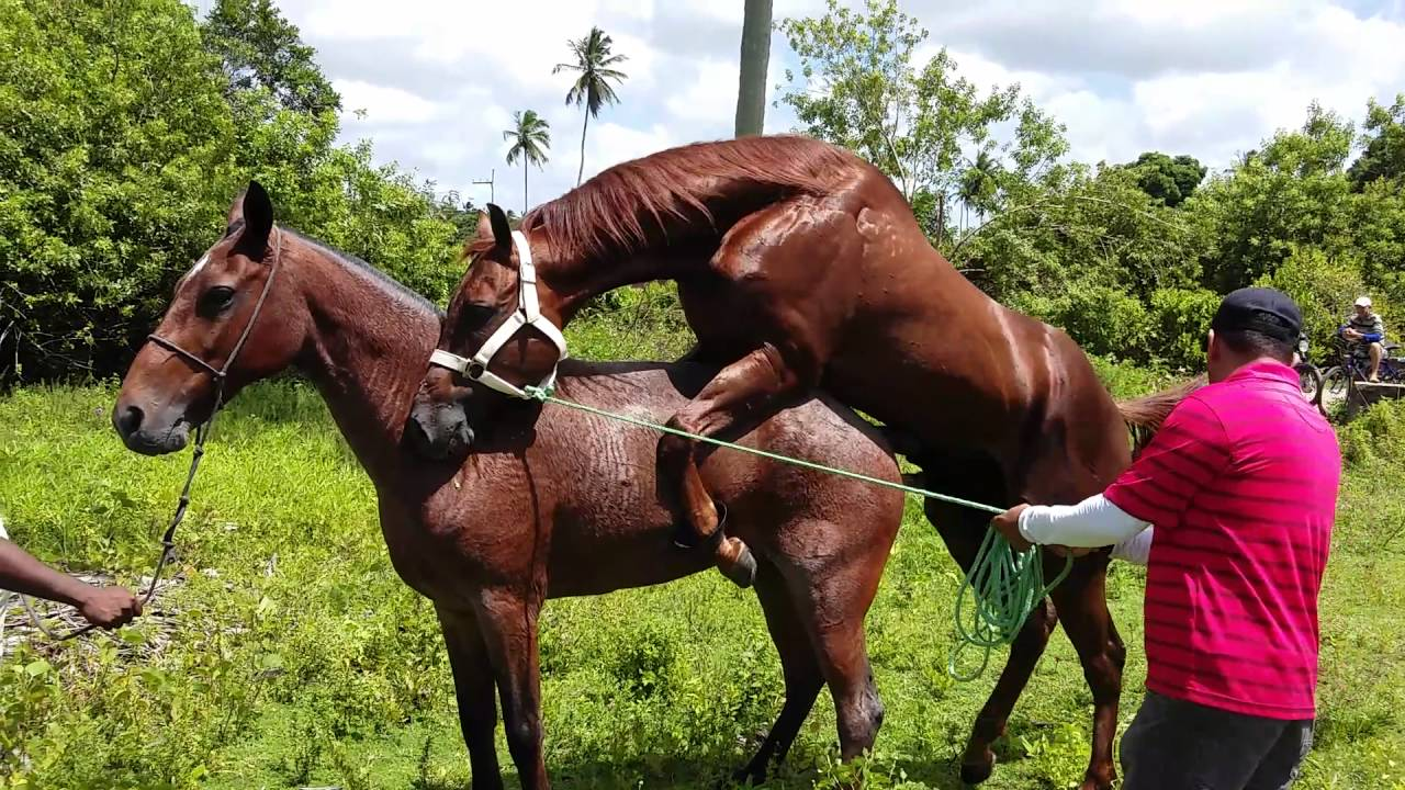 Fotos de cavalos cruzando com eguas 71