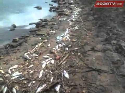 20-mile Fish Kill: 100,000 Dead Fish In Arkansas River