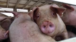 Smithfield Slaughterhouse Protest - WDFA
