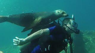 Sea Lion Loves Making New Friends