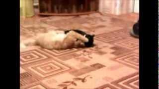Хорошо когда в доме 2 кота=) И такое каждый день!!!