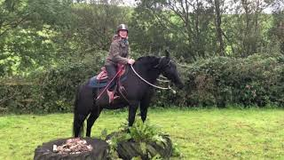 30 Day Horse Vlog Day 21 -Chief and I have a play session with Dylan and Isabella.