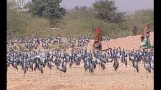 الهند القارة عجائب وغرائب