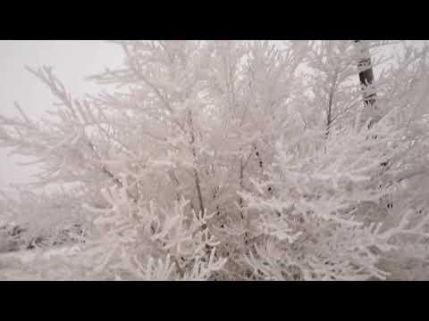Погода творит чудеса Славгород Алтайский край