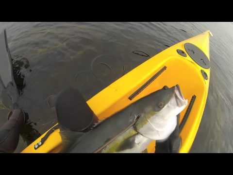 La Jolla Yellowtail Spearfishing