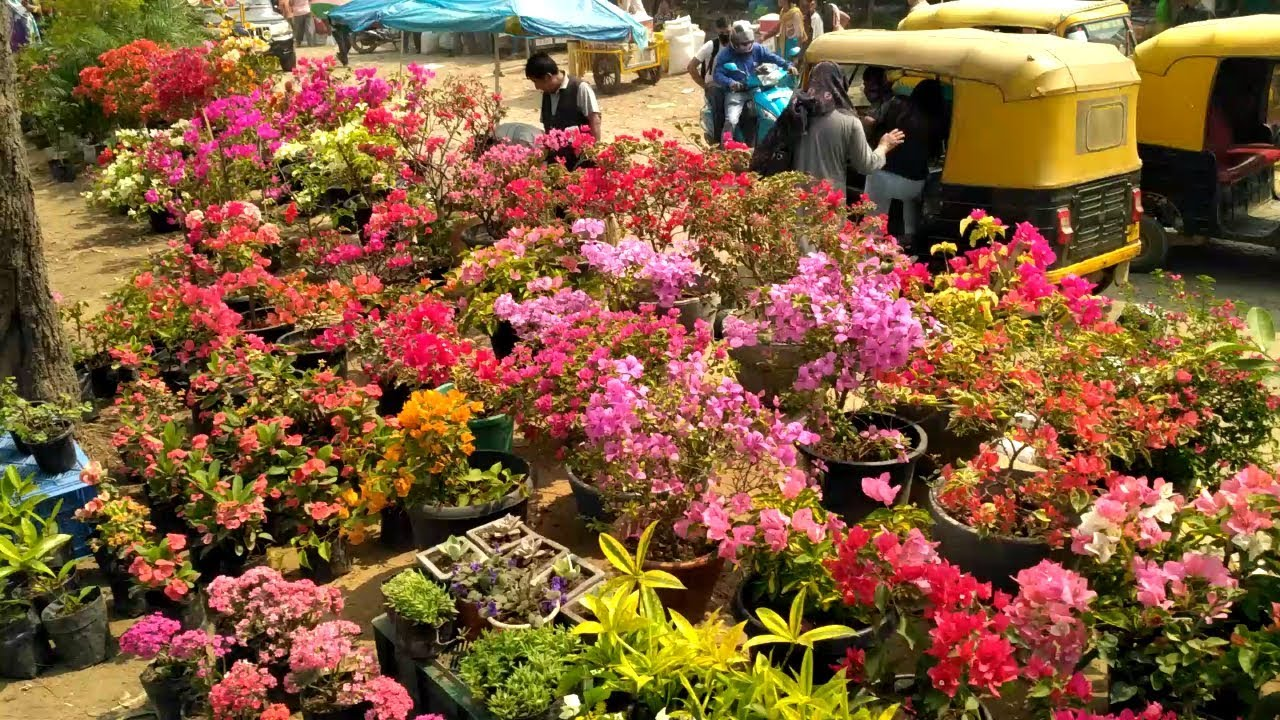 Flower Market in Dimapur - YouTube