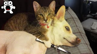 Proof Cats Are Evil Psychopaths