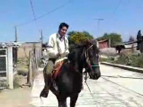 dave a caballo uaem
