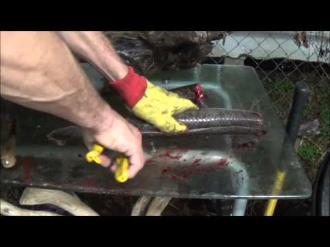 GAR FISH. Catching, Cleaning And Cooking.  This Is How Its Done!