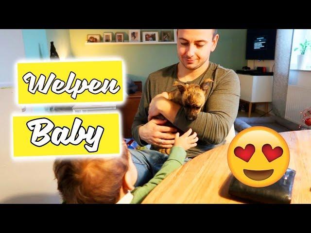 Neues Familienmitglied - Süßes Hundewelpen Baby - Vlog#1079 Rosislife