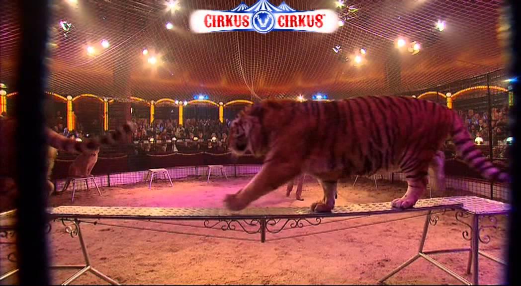 cirkus cirkus