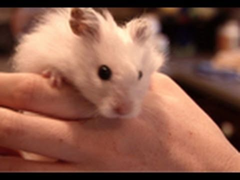 all about hamsters youtube