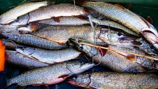 ОНА ЗДЕСЬ БЕШЕНАЯ Щука АТАКУЕТ прям у ЛОДКИ и КАТАЕТ ПО РЕКЕ Это ЖЕСТЬ Рыбалка 2021