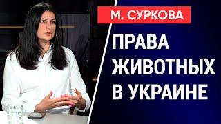 Права животных в Украине. Как будут наказывать за издевательства над ними? Марина Суркова