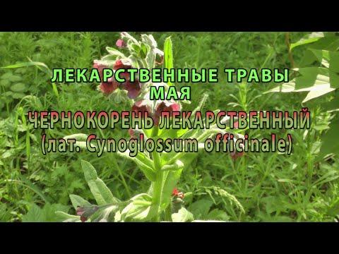 Лекарственные растения мая