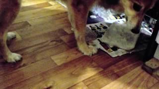 Магия! Собака ест и у неё поднимаются задние лапы в воздух!!!
