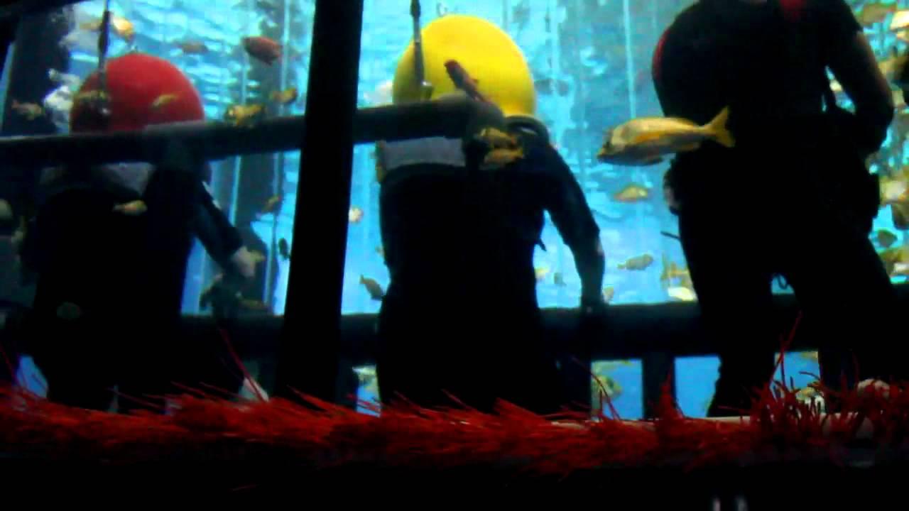 marineland rencontre avec les requins