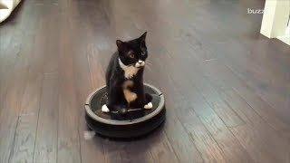 СИЛЬНЫЕ ПРИКОЛЫ Смешные дети Приколы с котами - Забавное видео (2019) МатроскинТВ