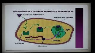 Dr EDUARDO KREMENCHUTZKY - HISTOLOGIA RAZONADA - GLANDULAS ENDOCRINAS