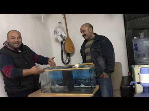 HAMBURG FİLTRE YAPIMI-YAVRU BALIK BOYLANDIRMA