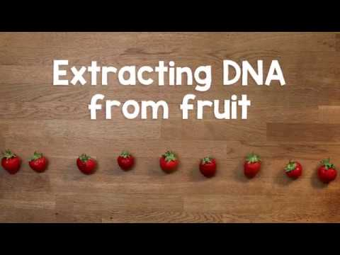 Extracting DNA from fruit