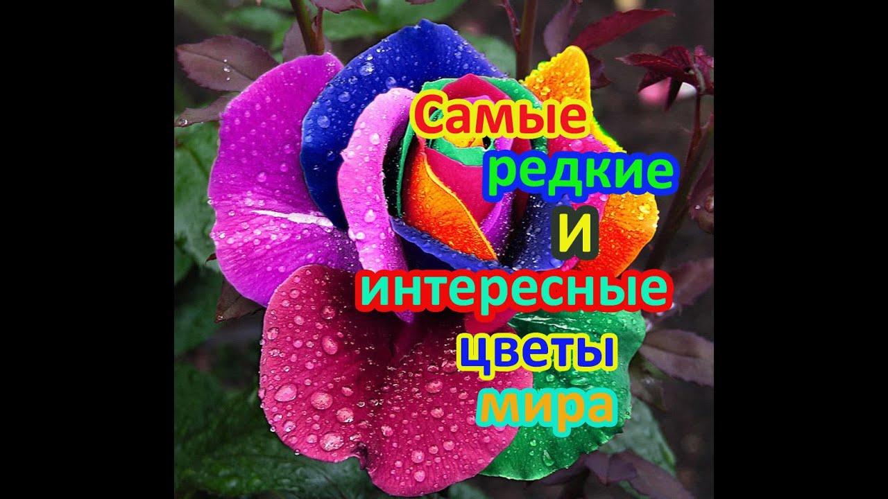 Самые интересные цветов