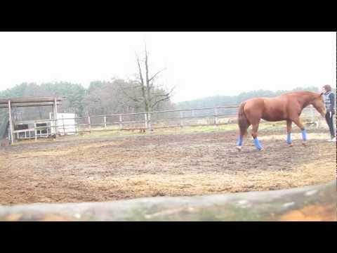 игра с лошадью :)