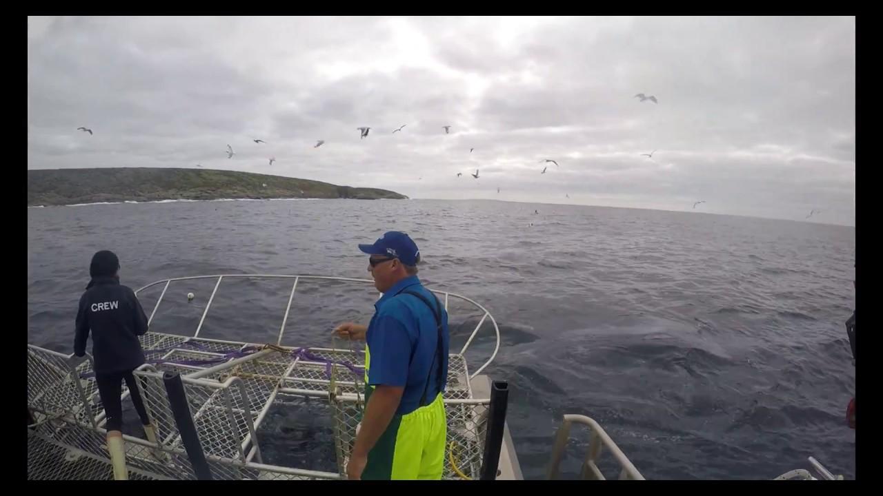 Shark Cage Dive, Port Lincoln | lilybeachtravels.com