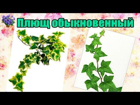 Быстрорастущие вьющиеся растения для забора – сделай свой участок неповторимым