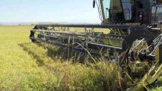 2013 California Rice Harvest