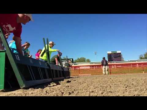 Wiener Dog Racing at New Orleans Fair Grounds