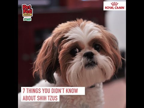 Shih Tzus at Royal Canin Discover Dogs at Pet Fed 2018!