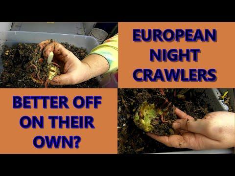 EUROPEAN NIGHT CRAWLERS ALL ALONE