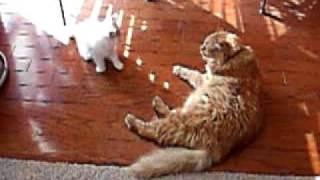 Big Red & Tater (kitten)1