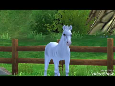 Immagini Di Cavalli Youtube