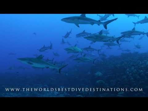 The Worlds Best Dive Destinations HD