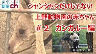 ジャイアントパンダ、シャンシャンの人気で盛り上がる上野動物園。かわ...