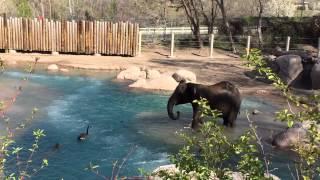 鳥には覇気があるようだ。動物園におけるゾウと鳥の戦いは続いていた