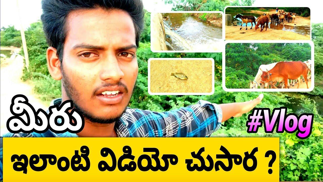peddamuddunoor Village cheruvu vlogs|Peddamuddunoor|Midde Ravi vlogs|Shiva vlogs| Indian vlog