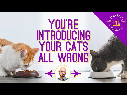 Cat Introductions: Good First Impressions Are A Must!