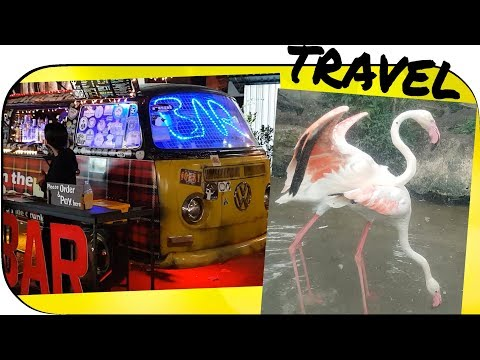 Thailand: Day 9 (The Travel Vlog Series) Mating Animals, Drunken Humans... oh my!