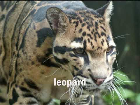 Rainforest Animals Youtube