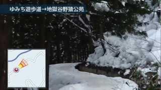 ゆみち遊歩道を通って地獄谷野猿公園へ行ってみましょう 1.8kmの道をゆ...