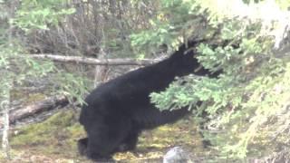 Black Bear Island Lodge Vacation