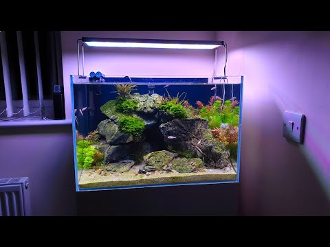 ALL MY HOUSE AQUARIUMS • Asking Kids Fish Tank Questions • FUNNY!